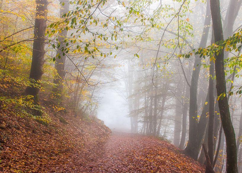 Herbst in Frahan von Peschen Photography