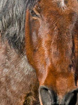 Portret van een paard van Brenda Gonzalez