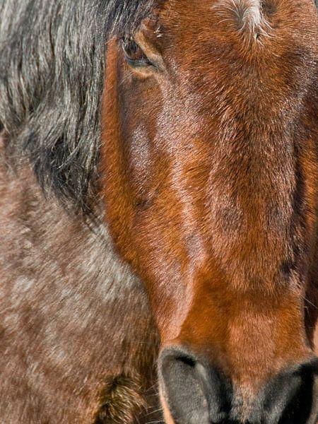 Portret of a horse von Brenda Gonzalez