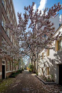 Blühende Magnolie von Peter Bartelings Photography
