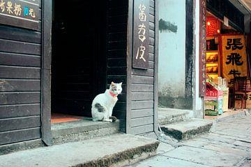 Droevige kat in de straten van Chongqing van André van Bel