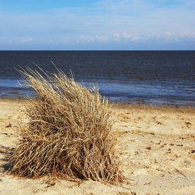 Grashoekjes op het strand van Frank Herrmann