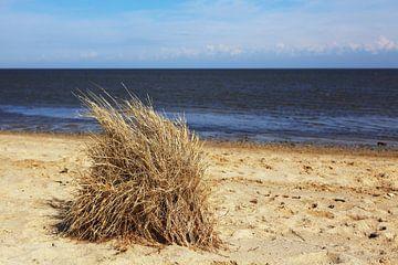 Des touffes d'herbe sur la plage