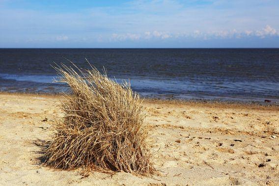 Grashoekjes op het strand
