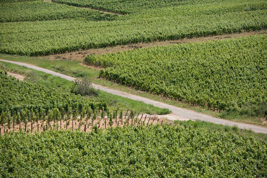 Zigzag door de wijngaard van Jim van Iterson