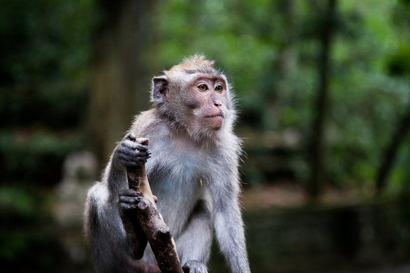 Poserende aap van Niels Boere