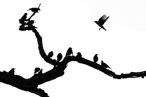 Silhouette der Vögel von