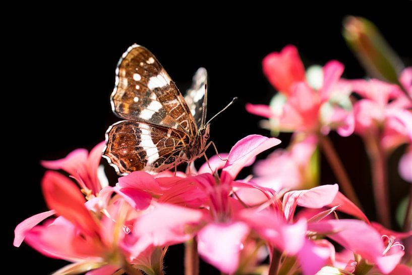 Landkaart vlinder op Azalea van Zsa Zsa Faes