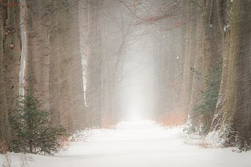 Winterlane