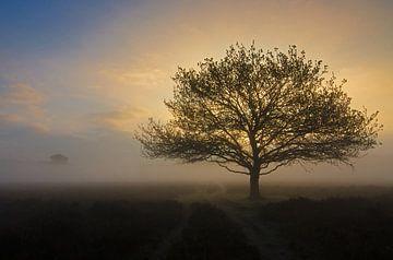 Zonsopkomst boom van