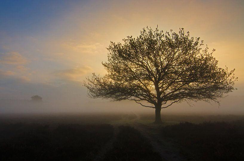 Zonsopkomst boom van René Vos