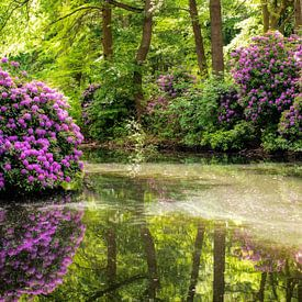 enchanted forest von Bernd Hoyen