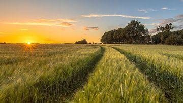 Wheatfield-Karrenweg bei Sonnenuntergang von Rudmer Zwerver