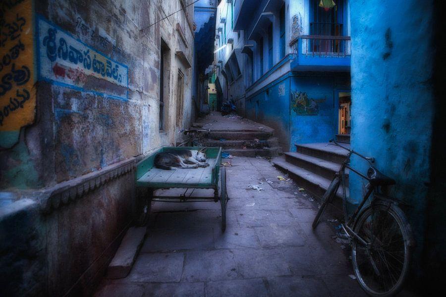 Slapende hond op handkar in sloppenwijk van Varanasi. Wout Kok One2expose