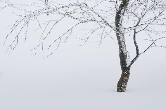 Boom in de sneeuw van Gonnie van de Schans