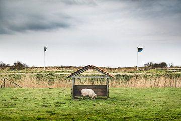 Texel XXIV von Steven Goovaerts