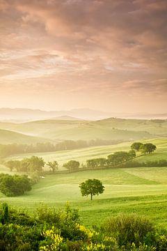 Einzelner Baum bei Sonnenaufgang, Toskana, Italien von Markus Lange