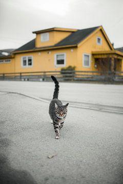 Typisch noors sfeertje kat van Martina Ketelaar