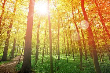 Le soleil brille à travers les branches sur BVpix