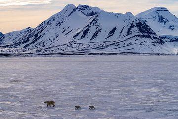 IJsbeer met 2 welpen op het prachtige Spitsbergen van Merijn Loch