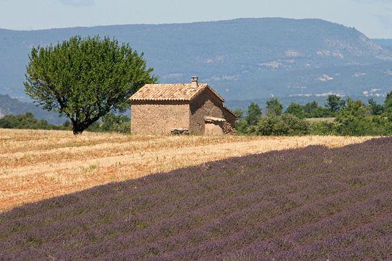 Huisje temidden van de lavendel