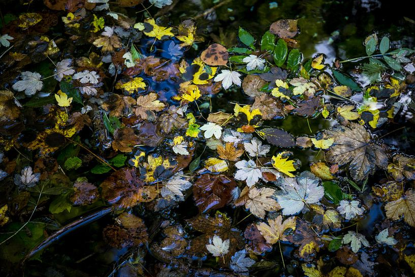 Herfst in het water van Meint Brookman