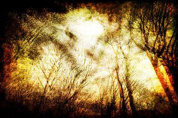 ochtend bos van Peter Baak