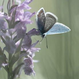 Orchids and blue von jowan iven