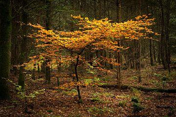 Solitärer Baum von Leo Kramp Fotografie