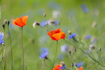 wilde bloemen van Tania Perneel