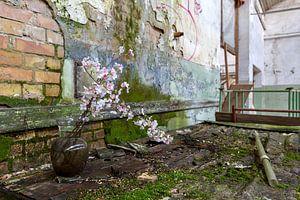 bloemen in een verlaten fabriek van