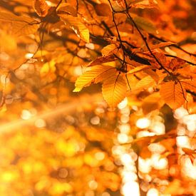 Herfst - Golden Brown van Cho Tang