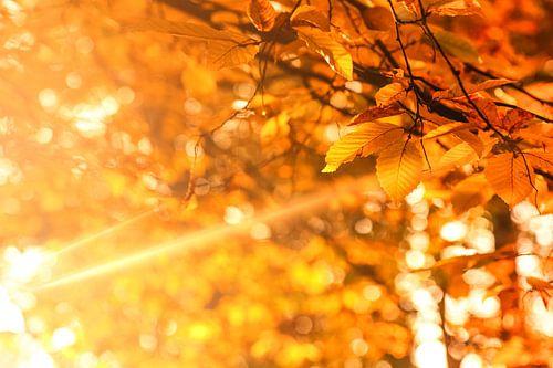 Herfst - Golden Brown von Cho Tang
