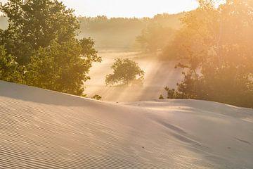 Sonnenaufgang - Loonse und Drunense Heide sur Laura Vink