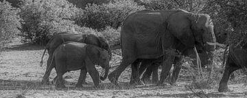 Eléphants du désert sur Joris Pannemans - Loris Photography