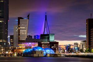 Rotterdam Nights