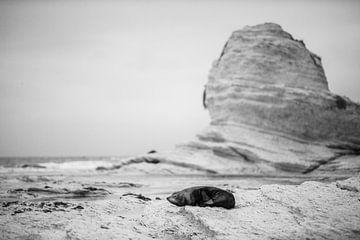 Grijze Zeehond van Jurgen Buijsse