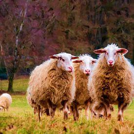 Spaziergang entlang der Schafe. von Frans Van der Kuil