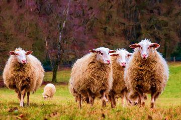 Wandelen langs de schapen.