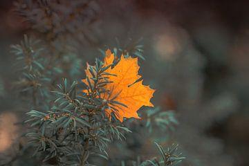 Herbst - Autumn van Dagmar Marina