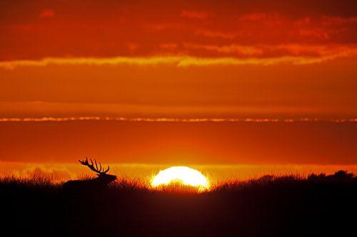 Zonsondergang op de veluwe van
