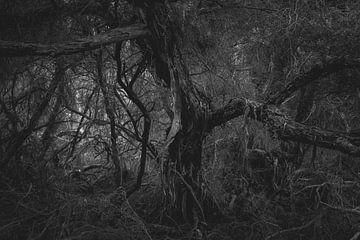 Dark Forest  sur Studio W&W