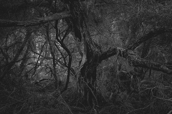 Het donkere Bos van Studio W&W