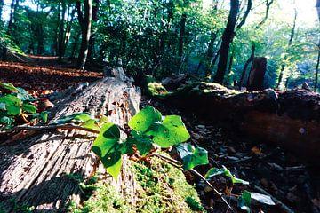 Mysterie van het bos van Marjolein Boltjes