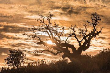 Heden en verleden van Leendert Noordzij Photography