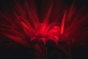 Rote Details von Sandra Hazes