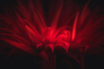 Détails rouges sur Sandra H6 Fotografie