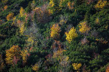 Herfstkleuren in de bergen van
