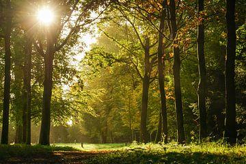 bos  von Dirk van Egmond