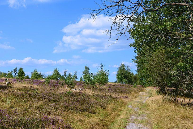 Heidebloesem in de Lüneburger Heide van Gisela Scheffbuch